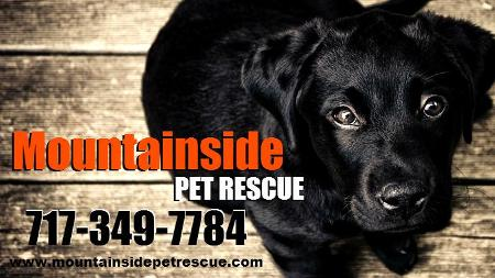 Mountainside Pet Rescue poster image